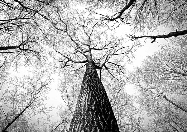 TREE BRANCHES: Black and White Photography Print