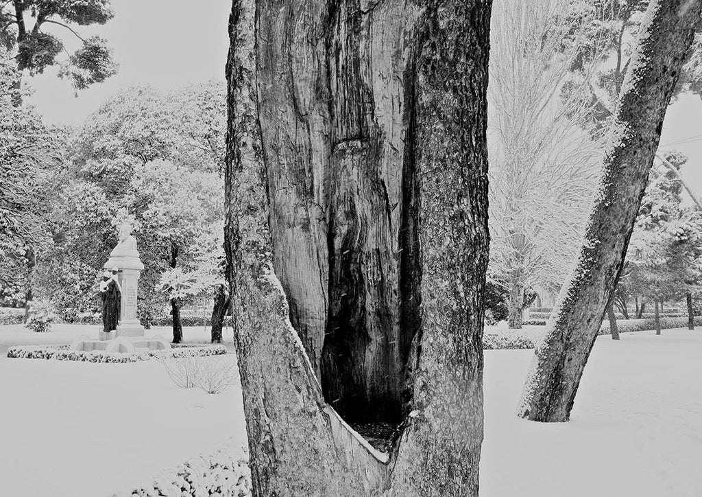 TREE TRUNK PHOTOGRAPH: Winter Art Poster - The Print Arcade
