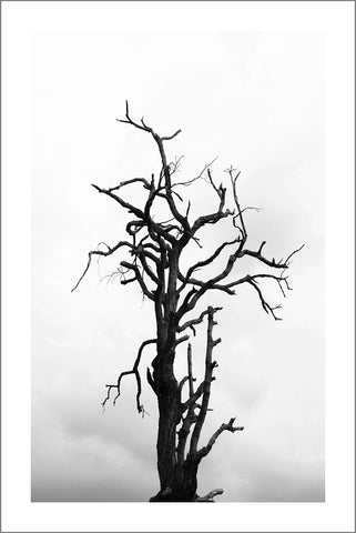 TREE IN WINTER PRINT: Black and White Nature Art