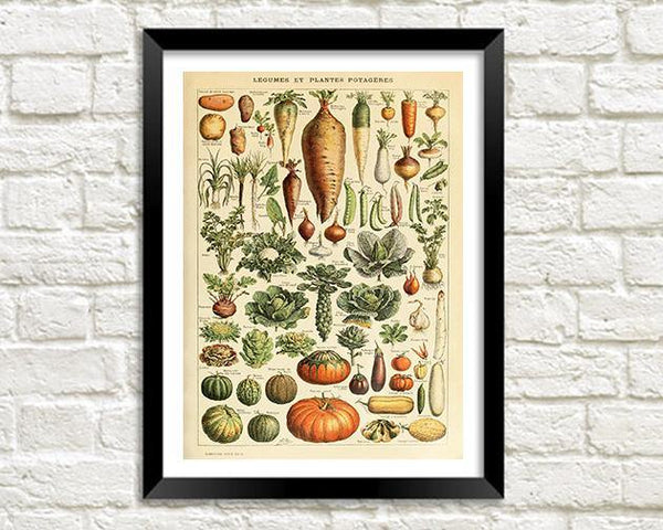 VEGETABLE PRINT: Vintage Art Illustration - The Print Arcade