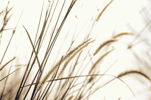 WHEATFIELD PRINT: Photography Art Poster