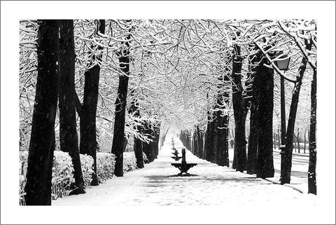 PARK IN WINTER: Snow Art Photography Poster