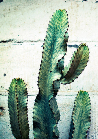 CACTUS PRINT: Plant Photography Art - The Print Arcade