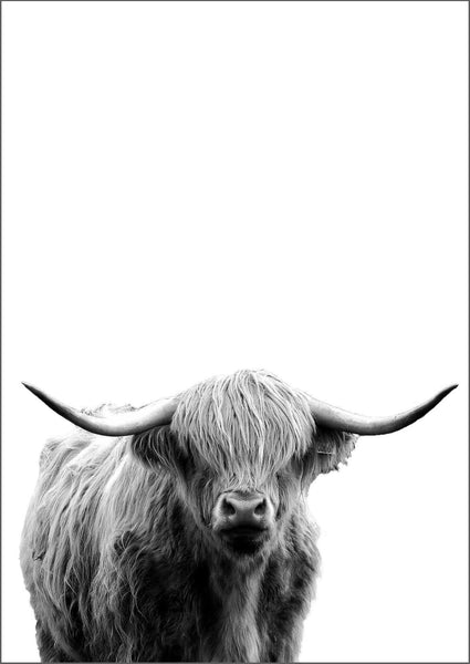 HIGHLAND COW: Scottish Cattle Photography Print - The Print Arcade