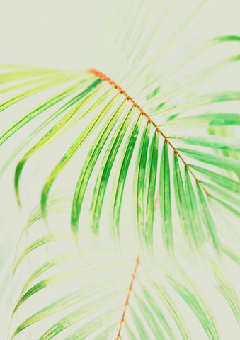 FERN FROND PRINT: Plant Photography Art