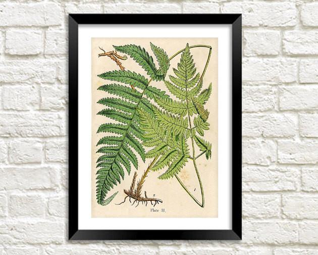 FERNS PRINT: Vintage Botanical Art Illustration - The Print Arcade