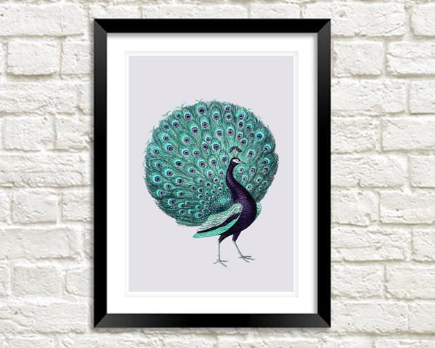 PURPLE PEACOCK PRINT: Vintage Turquoise Bird Art - The Print Arcade
