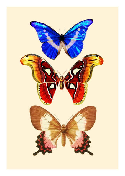 BUTTERFLIES PRINT: Vintage Art Illustration - The Print Arcade