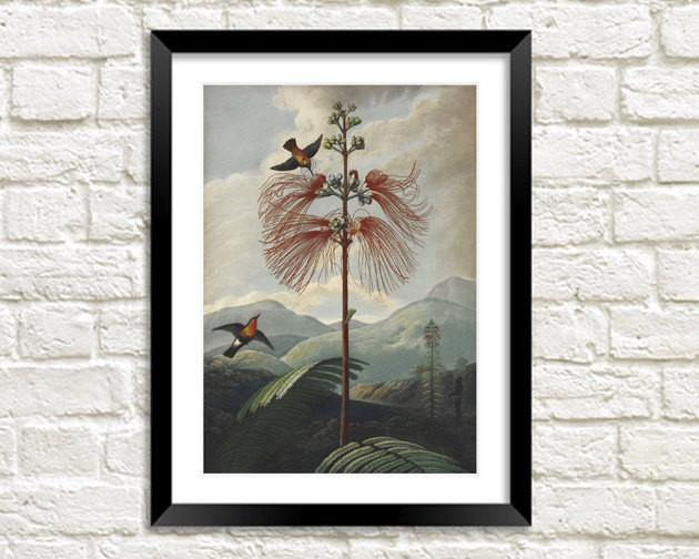 BIRD LANDSCAPE PRINT: Robert Thornton Illustration - The Print Arcade