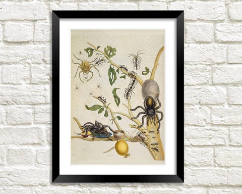 SPIDER ART PRINT: Vintage Insect Illustration - The Print Arcade