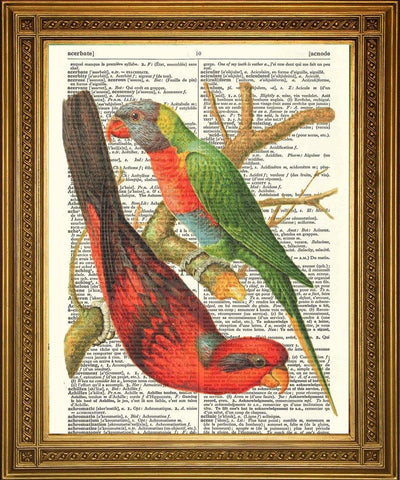 BUDGIE BIRDS: Vintage Dictionary Art Print - The Print Arcade