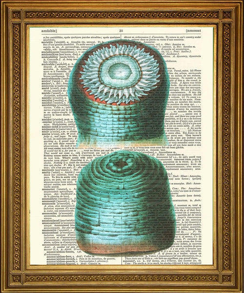SEA SHELL PRINTS: Dictionary Page Art Selection - The Print Arcade