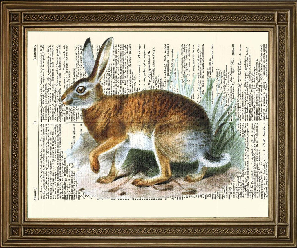 WILD HARE PRINT: Vintage Dictionary Page Art Illustration - The Print Arcade