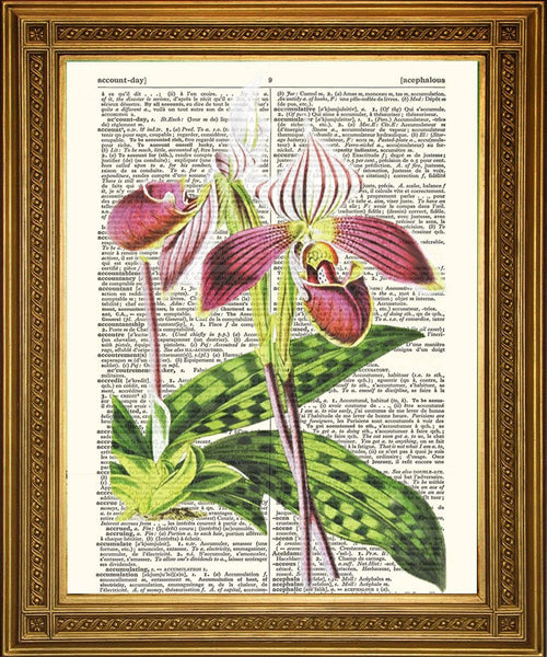 ORCHID FLOWER PRINTS: Dictionary Page Vintage Art - The Print Arcade
