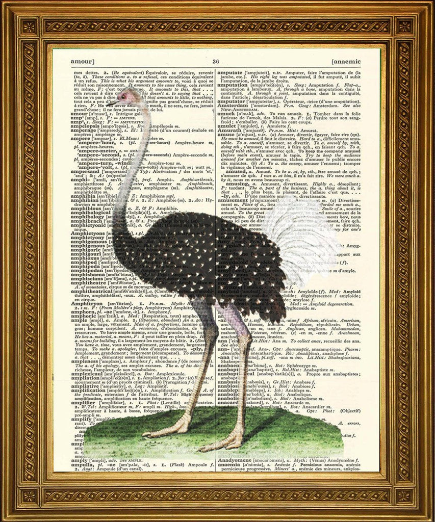 OSTRICH BIRD PRINT: Vintage Dictionary Page Artwork - The Print Arcade