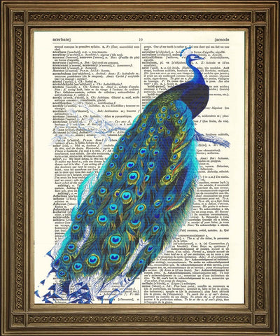 PEACOCK BIRD PRINT: Victorian Illustration Dictionary Art - The Print Arcade