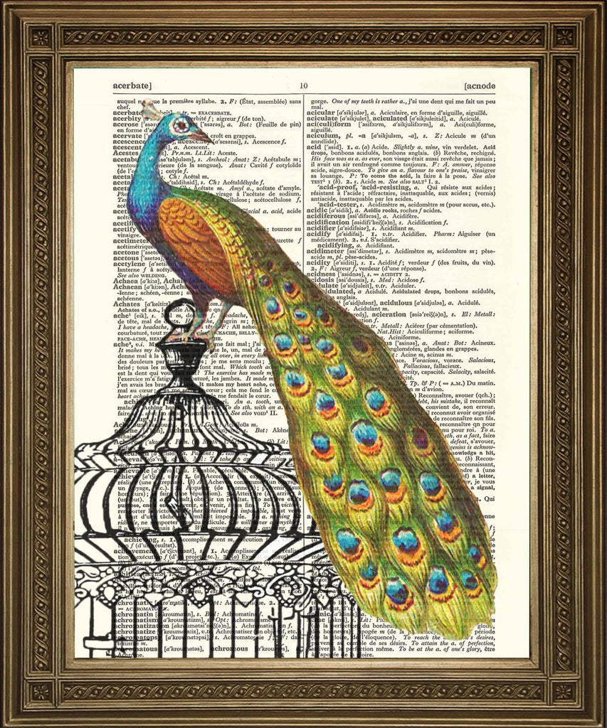 PEACOCK PRINT: Vintage Art Dictionary Page - The Print Arcade