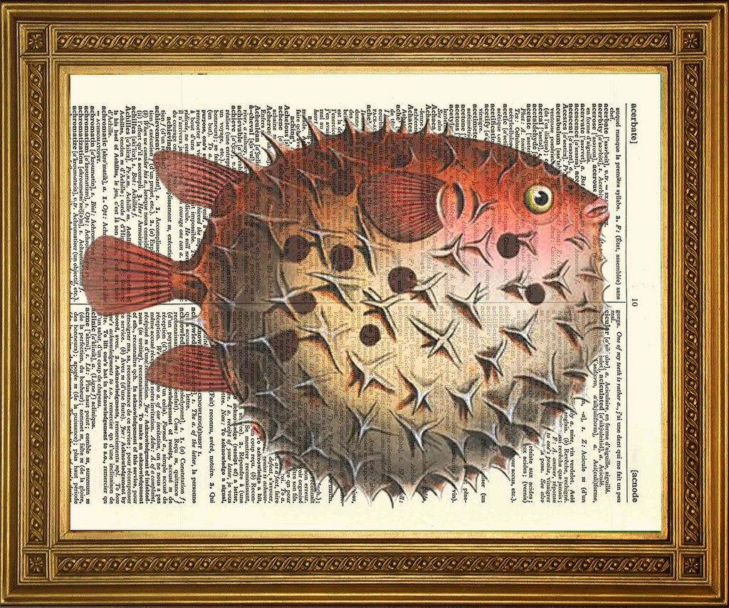 PINK PUFFER FISH: Dictionary Art Illustration Print - The Print Arcade