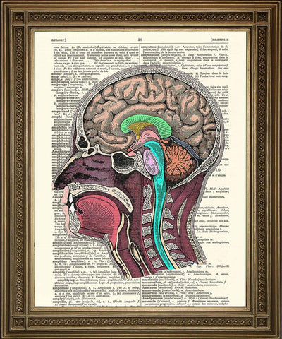HEAD ANATOMY ILLUSTRATION: Dictionary Art Print - The Print Arcade
