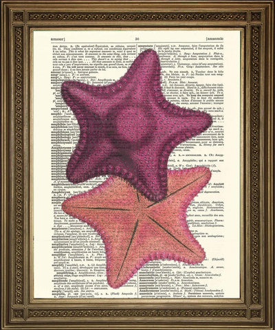 STARFISH PRINT: Vintage Sea Creature Dictionary Art - The Print Arcade