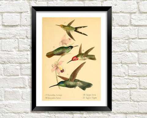 BIRDS ART PRINT: Vintage Bird Illustration - The Print Arcade