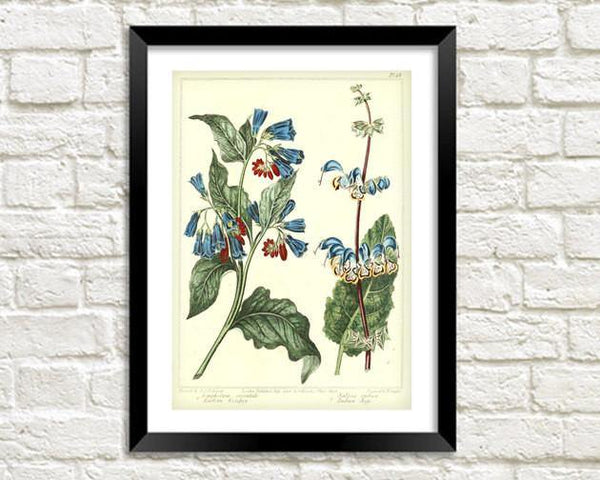 BLUEBELLS FLOWER PRINT: Vintage Woodland Art - The Print Arcade