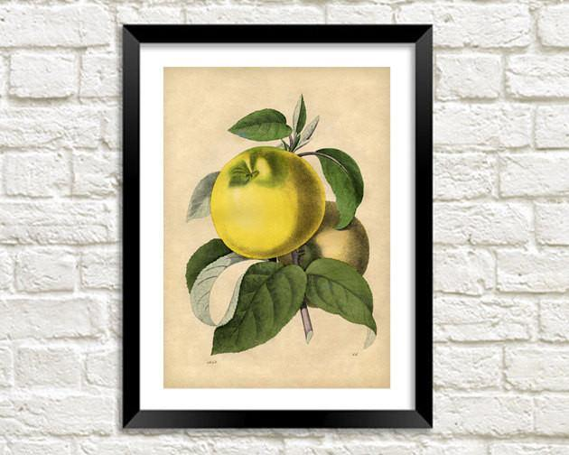 APPLE ART PRINT: Vintage Fruit Illustration - The Print Arcade
