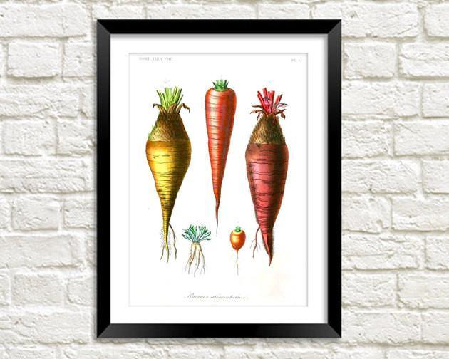 CARROTS PRINT: Vintage Vegetable Art Illustration - The Print Arcade