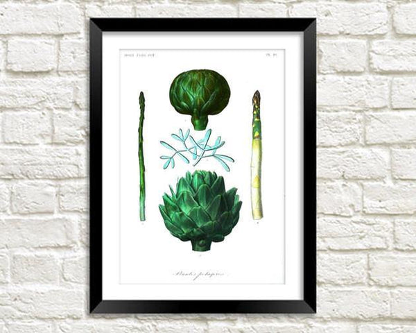 ASPARAGUS & ARTICHOKE PRINT: Vintage Vegetable Illustration - The Print Arcade