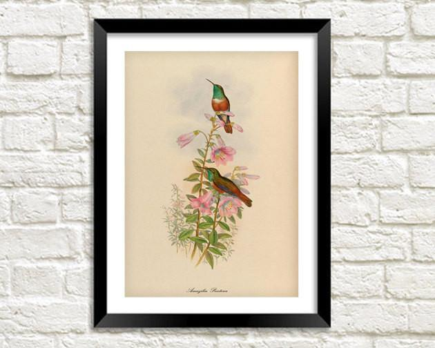 BIRDS ON FLOWERS PRINT: Vintage Garden Art Illustration - The Print Arcade