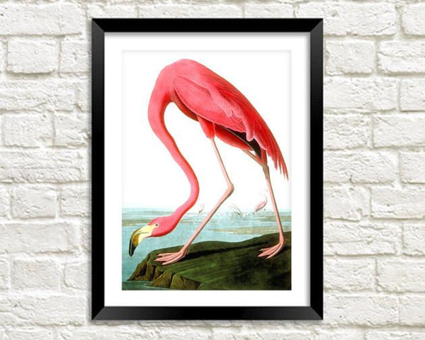 PINK FLAMINGO PRINT: Vintage Audubon Bird Art - The Print Arcade