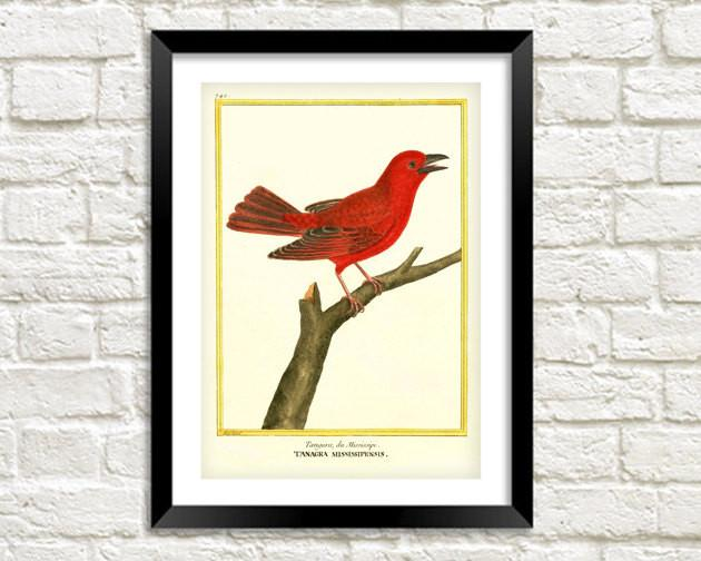 RED BIRD PRINT: Vintage Tanager Art Illustration - The Print Arcade