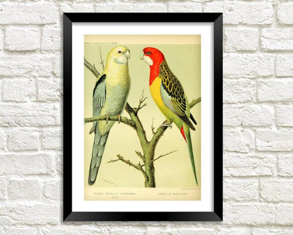 PARROTS PRINT: Vintage Bird Art Illustration - The Print Arcade