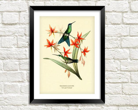 WOODNYMPH PRINT: Vintage Bird and Flower Art - The Print Arcade