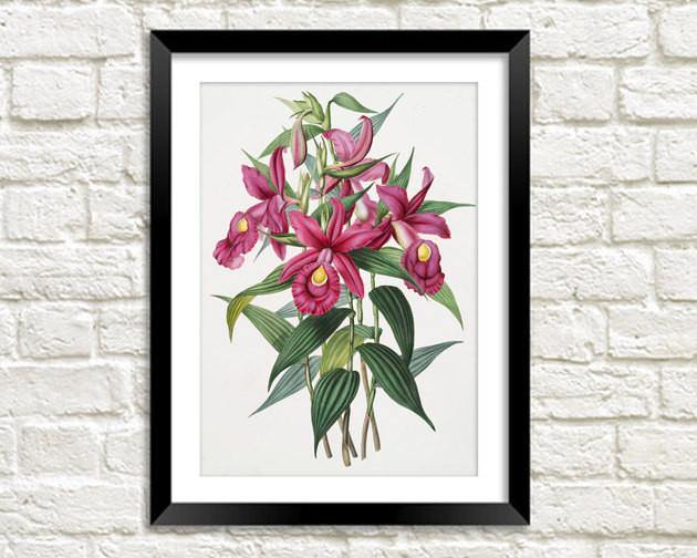 FUCHSIA FLOWER PRINT: Vintage Pink Art Illustration Wall Hanging - The Print Arcade