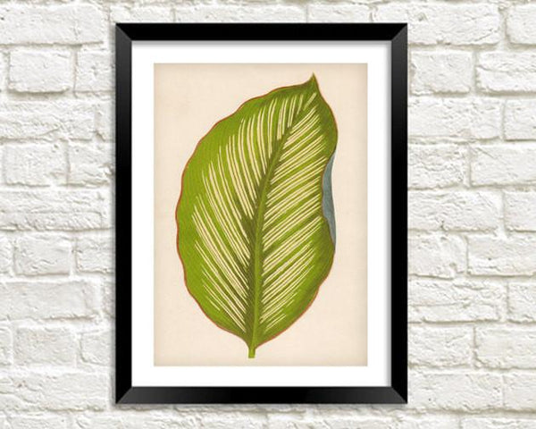 LEAF ART PRINT: Vintage Green Leaf Illustration - The Print Arcade