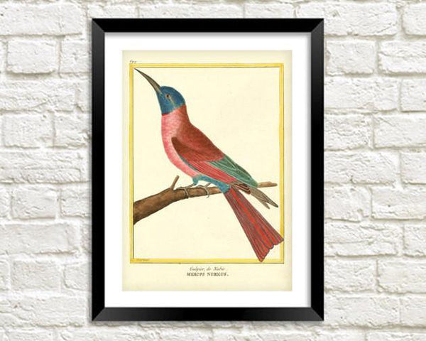 HUMMING BIRD PRINT: Vintage Martinet Bird Art - The Print Arcade