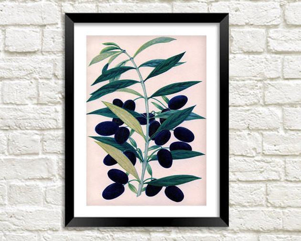 BLACK OLIVES PRINT: Vintage Olive Art Illustration - The Print Arcade