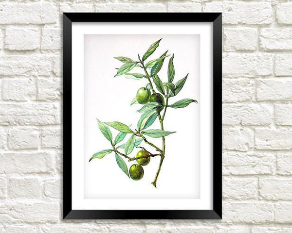 GREEN OLIVES PRINT: Vintage Olive Art Illustration Wall Hanging - The Print Arcade