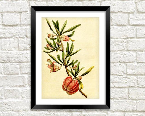 PINK FLOWER PRINT: Vintage Orchid Art Illustration - The Print Arcade