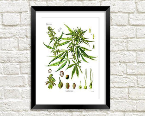 HEMP ART PRINT: Vintage Cannabis Plant Illustration - The Print Arcade