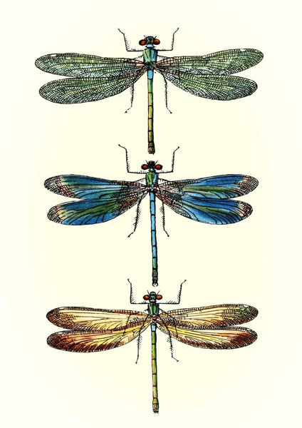 DRAGONFLIES ART PRINT: Vintage Dragonfly Illustration - The Print Arcade