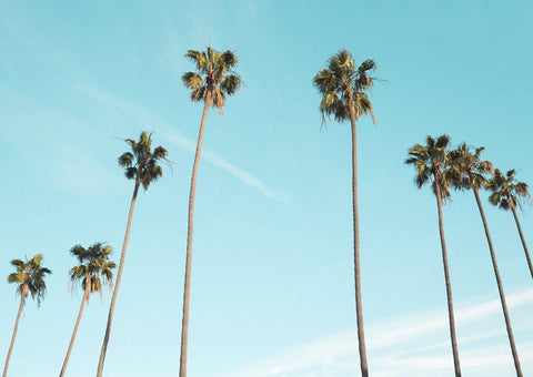 PALM TREES: Landscape Photography Print
