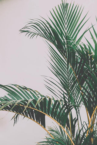 PALM LEAVES PRINT: Green Plant Photo Art