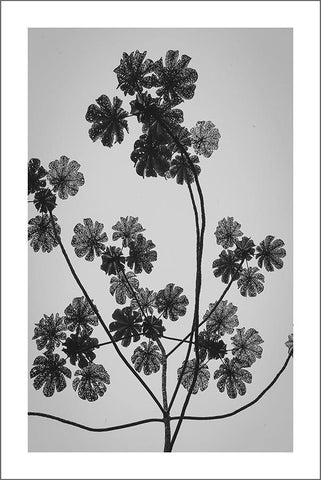 LEAVES AGAINST SKY PRINT: Plant Silhouette Photo Art