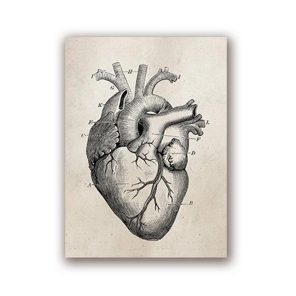 HUMAN ANATOMY PRINTS: Brain, Heart, Lungs Skeleton Medical Art Illustrations on Canvas - The Print Arcade
