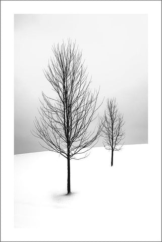 TREES IN SNOW: Photography Poster Art