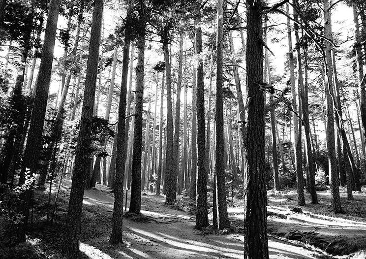 TREES PHOTOGRAPH: Woodland Forest Art Poster - The Print Arcade