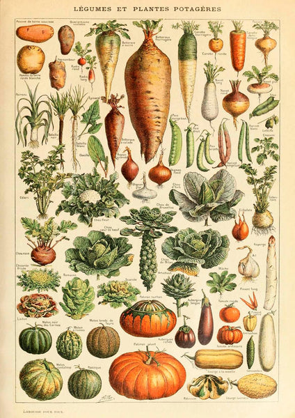 VEGETABLE PRINT: Vintage Art Illustration