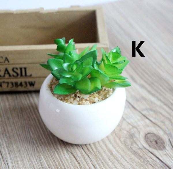 Mini Decorative Succulent Plants - life after yes